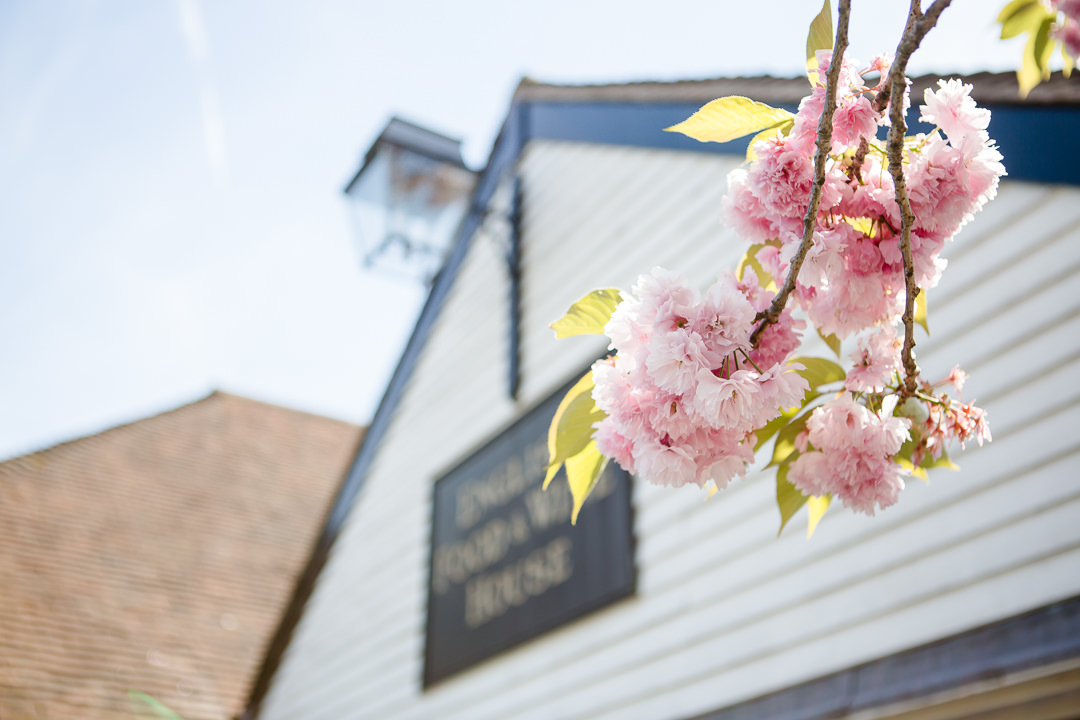 blossom in front of the Anchor Inn Lower Froyle Hampshire